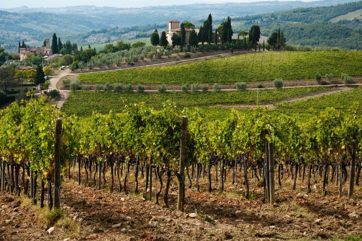 Chianti Winery & Vineyards