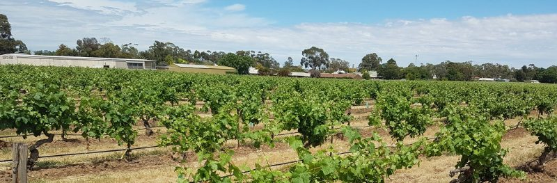 Barossa Valley wineries