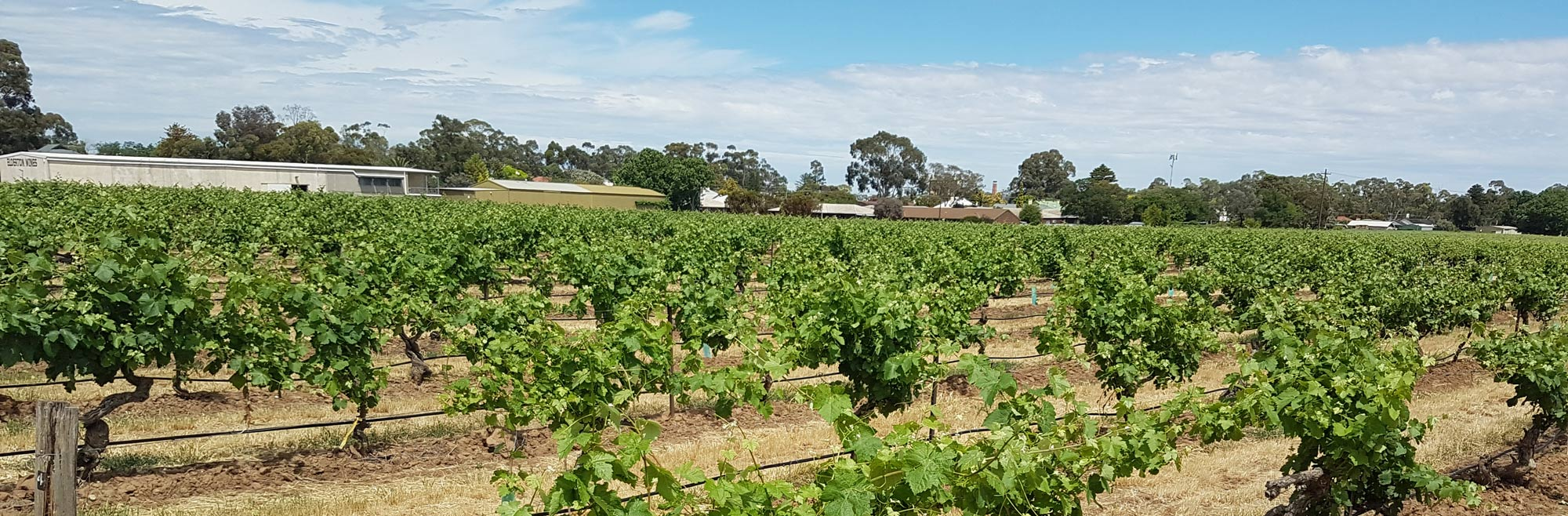 Visiting Barossa Valley Wineries: Where to Taste, Stay and Eat