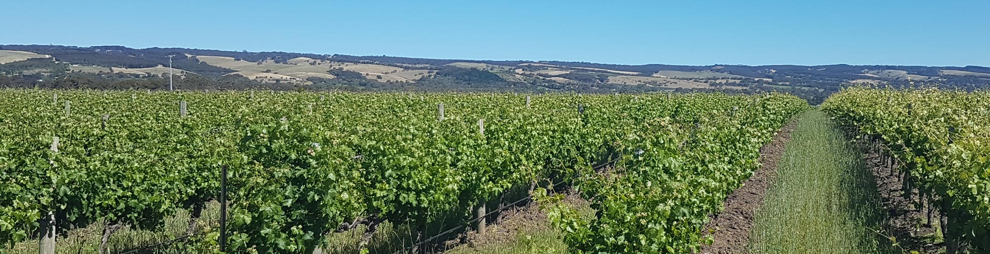 Visiting McLaren Vale Wineries: Where to Taste, Stay and Eat