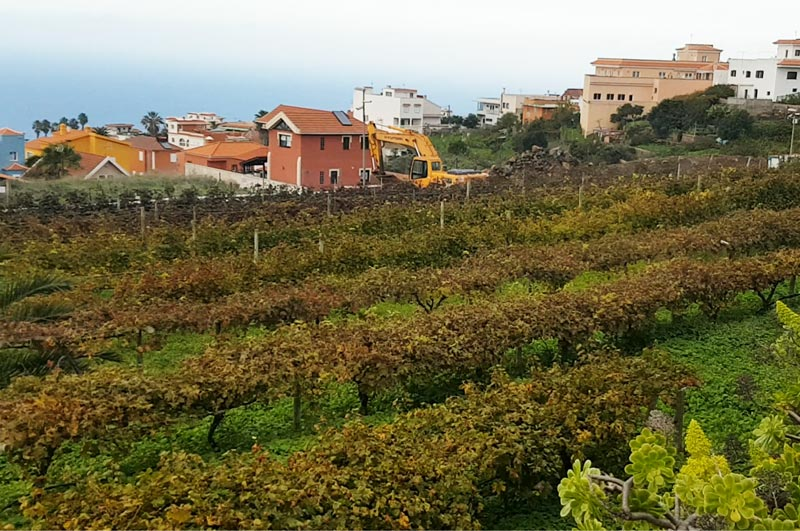 Vineyards in Tenerife