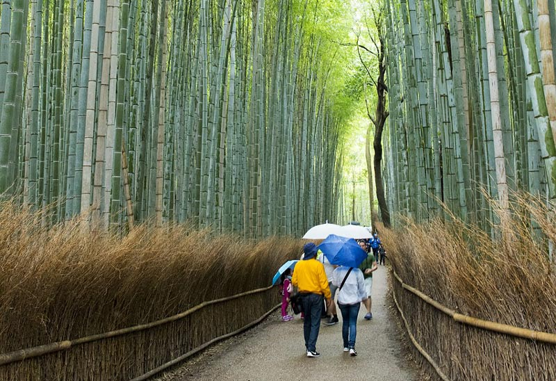 Arashiyama bamboo grove - 3 days in Kyoto
