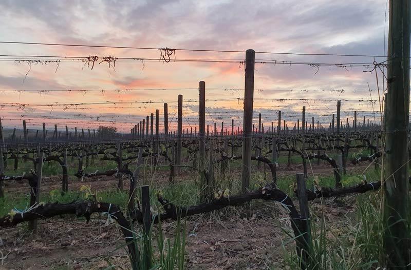 Tokaj winery, Grof Degenfeld