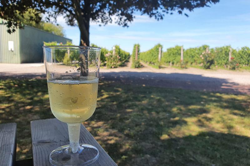 Barnsole vineyards