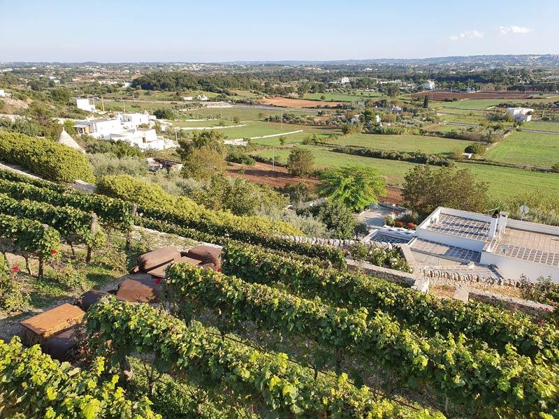 Puglia wineries