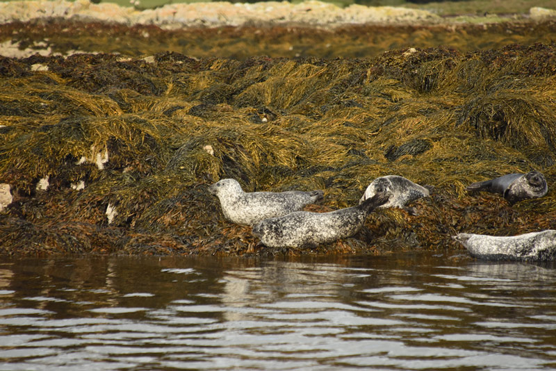 Seals on the Ring of Beara