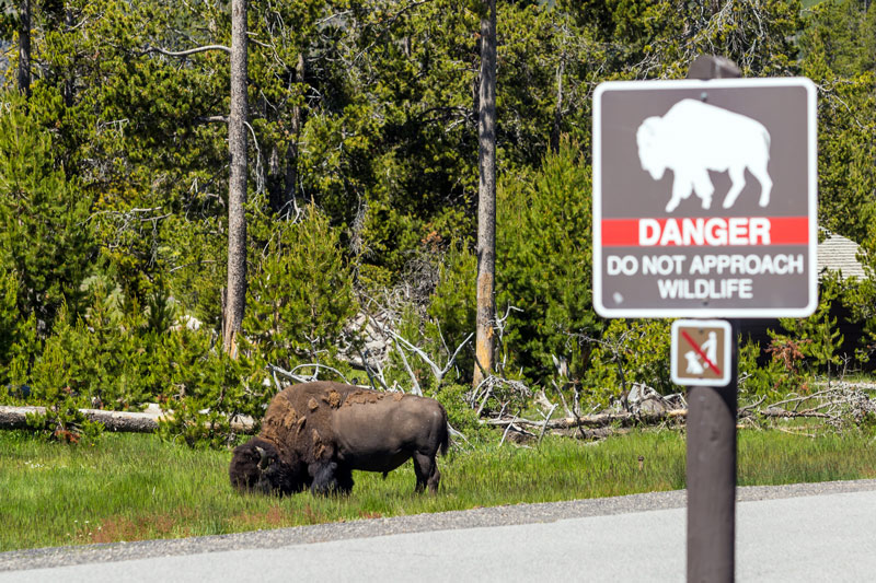 caution sign for wildlife in Yellowstone national park