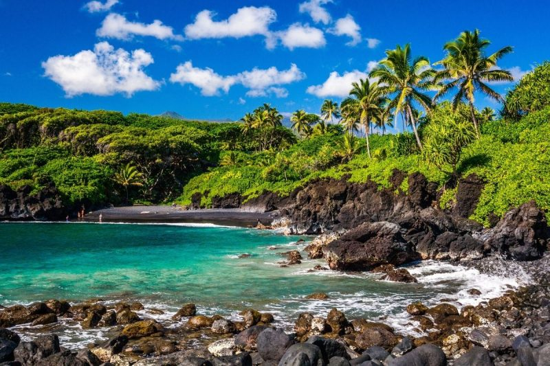 Beach, Ocean and Palm Trees in Maui